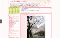 多摩川のお花見 すごくきれいです!!