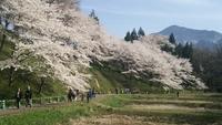 SAFTY PALのの輪を広げようの部 〜お花見ツーリング〜 2016/03/23 00:20:00