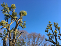 冬らしい青空 2017/01/16 22:07:00