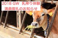 【満員御礼】 GW期間の乳搾り体験 受付終了のお知らせ
