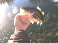初釣りと偏光サングラス