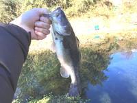 2018年の初釣り