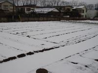 積雪のため作業できず(3月10日)