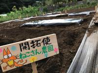 2017初秋の農園日誌 2017/09/24 17:00:00