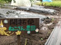 泥だらけのねこさん農園での種蒔き奮闘記! 2018/09/21 16:27:00