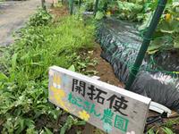 夏野菜の収穫のハズが・・・ 2018/06/02 11:51:00