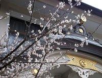 清瀬の白梅・・日枝神社