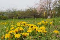 農の学校、畑と果樹の入学式&オリエンテーション