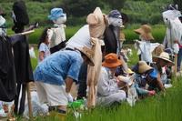 田んぼの生き物観察会は8年目