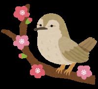 立春・次候:黄鶯睍睆(うぐいす なく)で春を感じたら【腰】のメンテナンス時期~☆ 2018/02/09 08:53:00