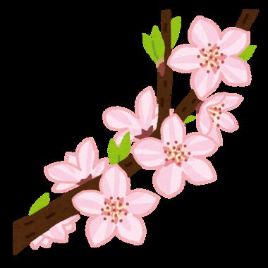 『いらすとや』さんからお借りした桃の花のイラスト☆
