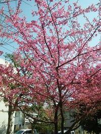 お花見☆梅もさくらも!