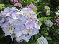 6月の花々~下曽我