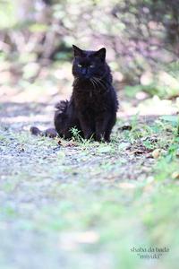 黒い猫~昭和記念公園
