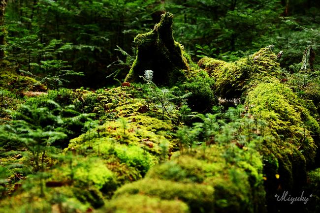 八千穂高原・苔の森