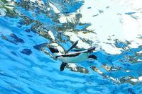 池袋サンシャイン水族館~ペンギン