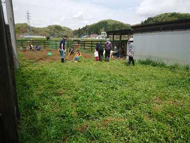 ヤギに草をあげている 光景はとても和みます。