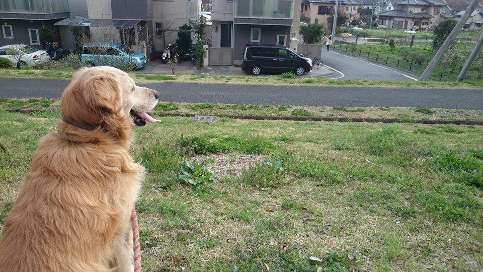 コロ君の日本探訪
