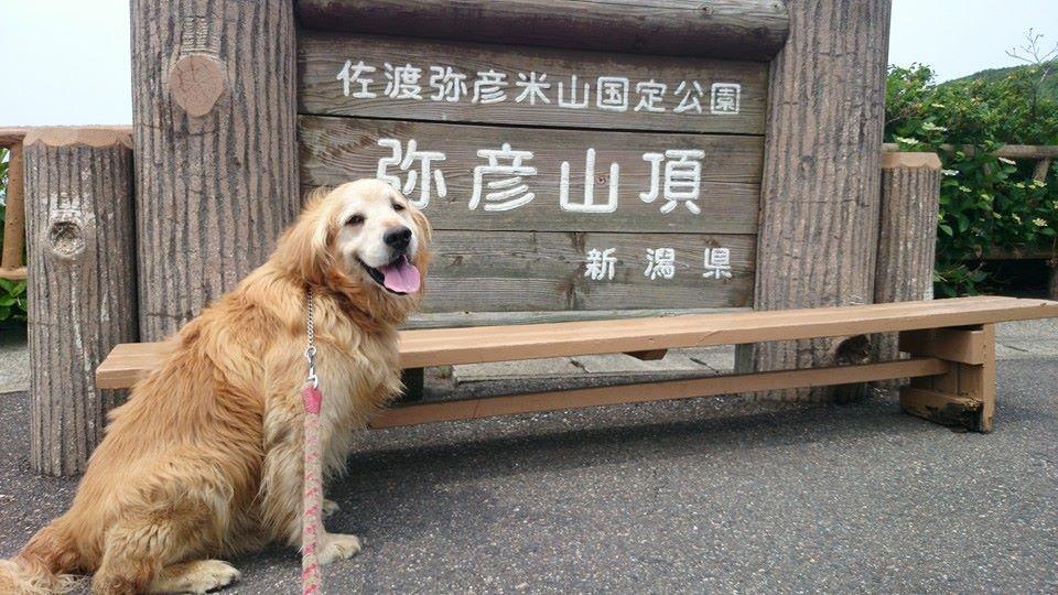 コロ君と日本探訪