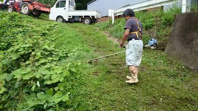 田んぼのあぜ道も田植え後に伸びてきました。