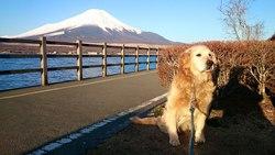 素晴らしい、富士山です。