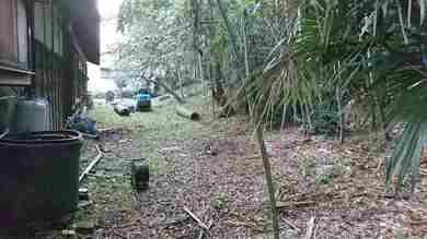 昔から孟宗竹の竹林の裏庭です。