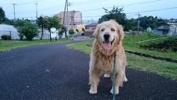 八王子から帰宅後のコロ君と里山公園で散歩