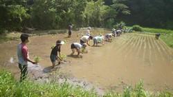 稲の苗に毎日、毎日の仕事として 水やりをしてきて立派な稲の苗に育ちました。
