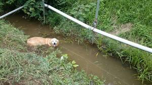 暑く小川の中に気持ちよさそうに 浸かっていましたね。