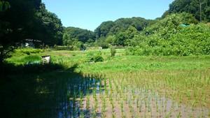 八王子市市街化調整区域における農業と福祉の協働事業はすべき
