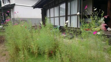我が家の庭にこぼれた種