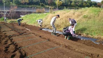 農業体験農園でスナックエンドウ苗植え