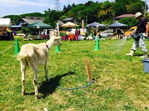 堀之内の公園で「ヤギと遊ぶ」を中心に 福祉施設の野菜即売も加わり