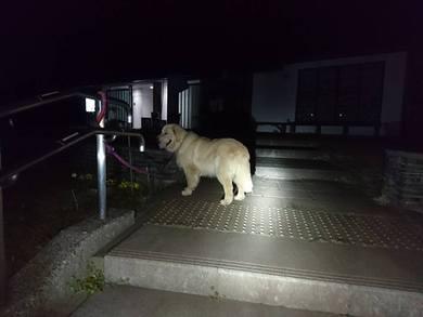 愛犬レオ君の散歩