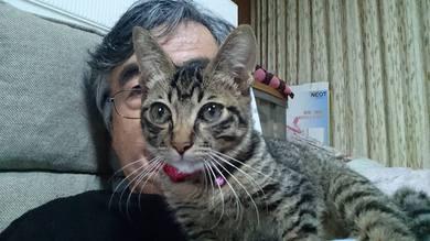 我が家にいる子猫