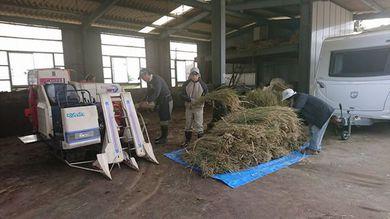 稲作作業の脱穀、籾摺りをユギムラ牧場