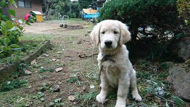 愛犬レオ君の犬小屋のペンキ塗り