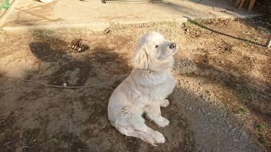 愛犬レオ君が大きな穴を掘っていました