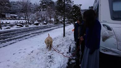レオ君は雪を食べたり、 走ったりで大はしゃぎ