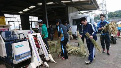東京薬科大生の里山活動の収穫作業の場