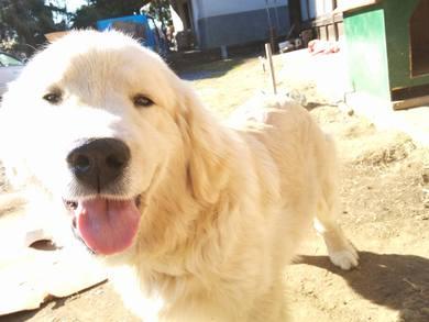 愛犬レオ君に会いに来てくれていました