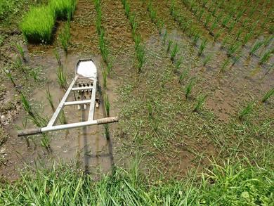 これから、、田んぼの草取り
