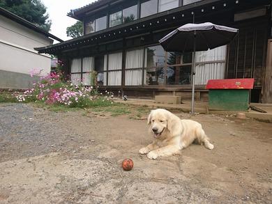 愛犬レオ君ともボール遊びをしていました。