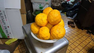 収穫した柚子でゆず湯