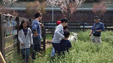 子どもたちとヤギと遊んだりしていました。