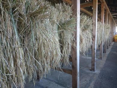 農業体験施設内には稲を干していた