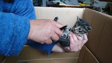 野良猫が 子猫を3匹生んでいた