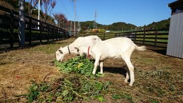 ユギムラ牧場の農業体験農園