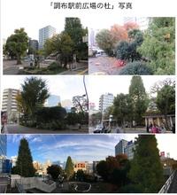 TBSテレビ「噂の!東京マガジン」で調布駅前広場の樹木について放送