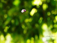 秋の七草~葛